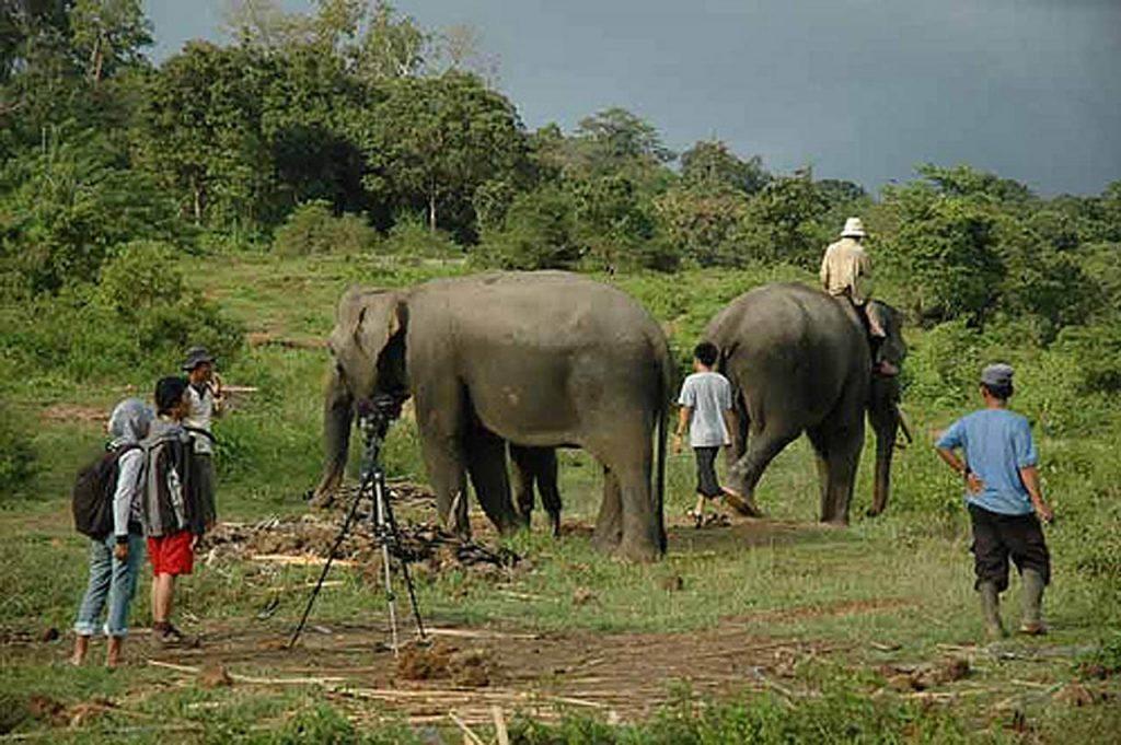 Pusat Latihan Gajah Seblat