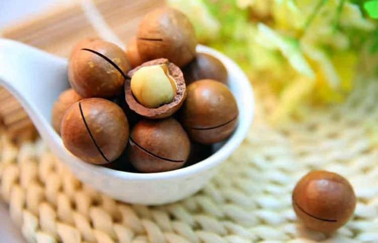 Gambar kacang macadamia - elitereaderscom