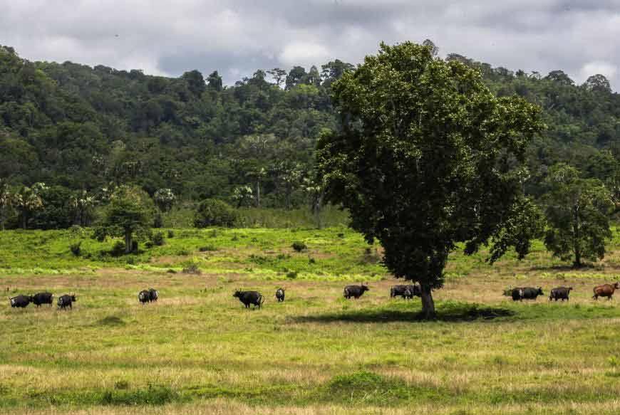 Padang Savana Taman Nasional Alas Purwo Banyuwangi