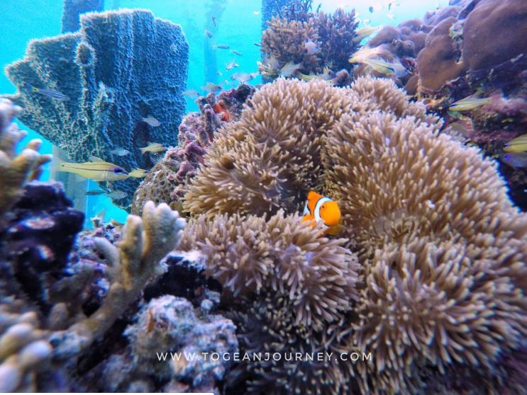 Tanjung Keramat - @togeanjourney