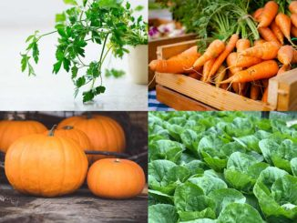 Makanan yang mengandung beta karoten