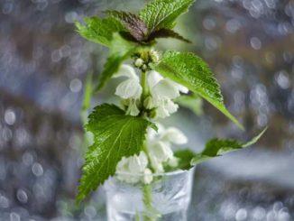 jenis jenis sayuran hidroponik - Galina Tcarkova @galchonog - unsplash